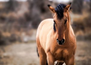 Horse photography caldwell idaho