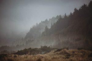 fog on the california coastline gold bluffs beach campground los angeles wedding photographer