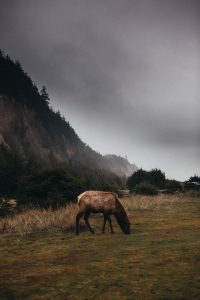 elk at the california coastline gold bluffs beach campground fog storms elk in the mountains