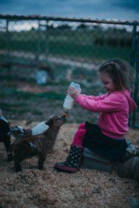 Toddler feeding dwarf goats unique family photos lifestyle photography Los Angeles