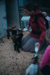 Farmer girl feeding three dwarf goats at once