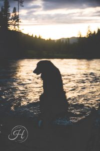 pet photography river silhouette creative moody portrait photography Boise Idaho