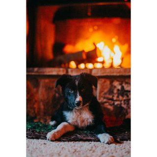 Matt keeps me warm with fires. I love him. #merrychristmas #fireplace #cabin #crestline #lakegregory #puppy #arri #bordercollie #bordercolliesofinstagram #cabinlife #love #cozy #rest